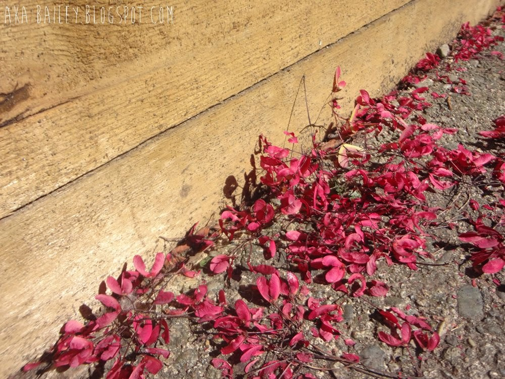 Pink flower petals against a brown wooden wall