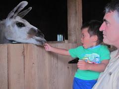 Alexandre feeding a lama
