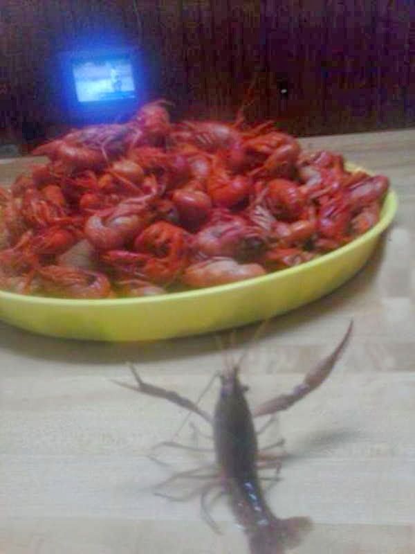 Funny animals of the week - 10 January 2014 (35 pics), funny crab