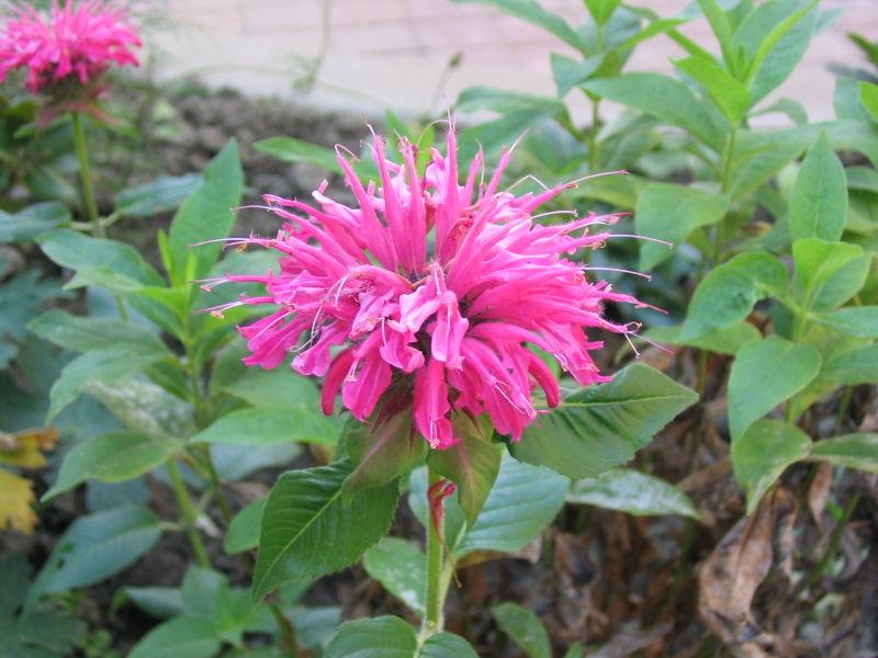 Connecticut NOFA: Plant for Pollinators!