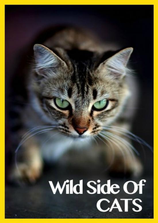 el-lado-salvaje-de-los-gatos