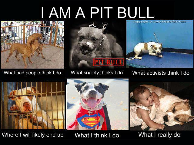 The pit bull project is the media to blame