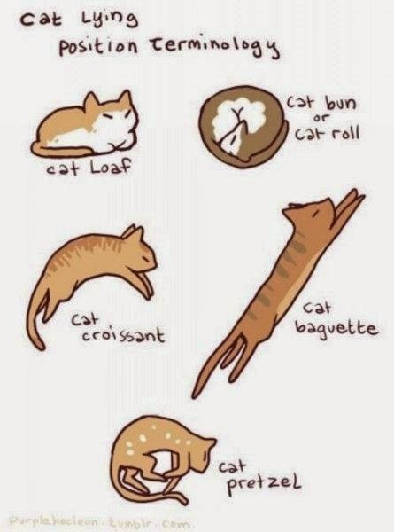 cat lying positions terminology