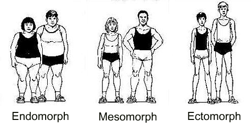 how to lose weight as an endomorph