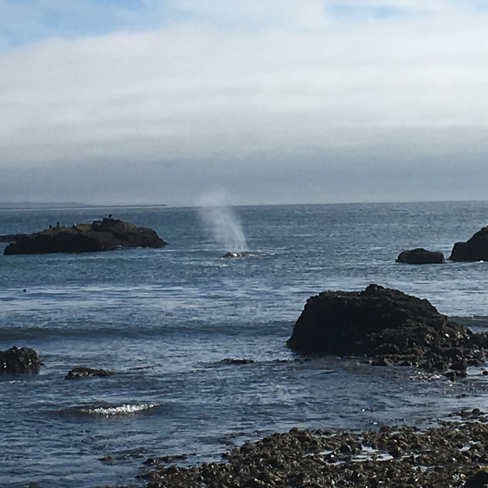 We saw spouting whales galore, this one close to shore.