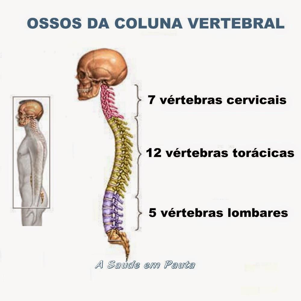 Nomes e localização dos ossos da coluna vertebral