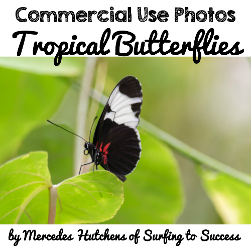 Commercial Use Photos: Tropical Butterflies