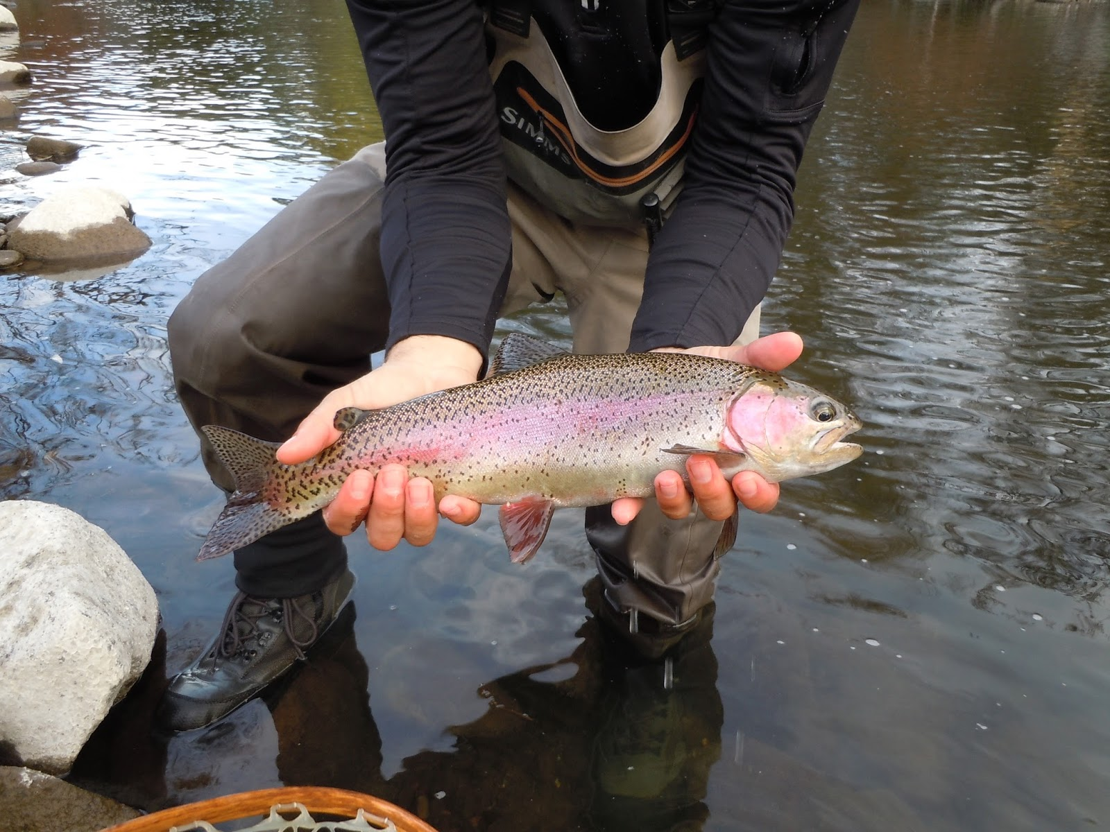 Rob russell 39 s northern california fly fishing for Trout fishing northern california