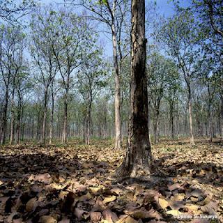 Persebaran Flora dan Fauna Indonesia 6