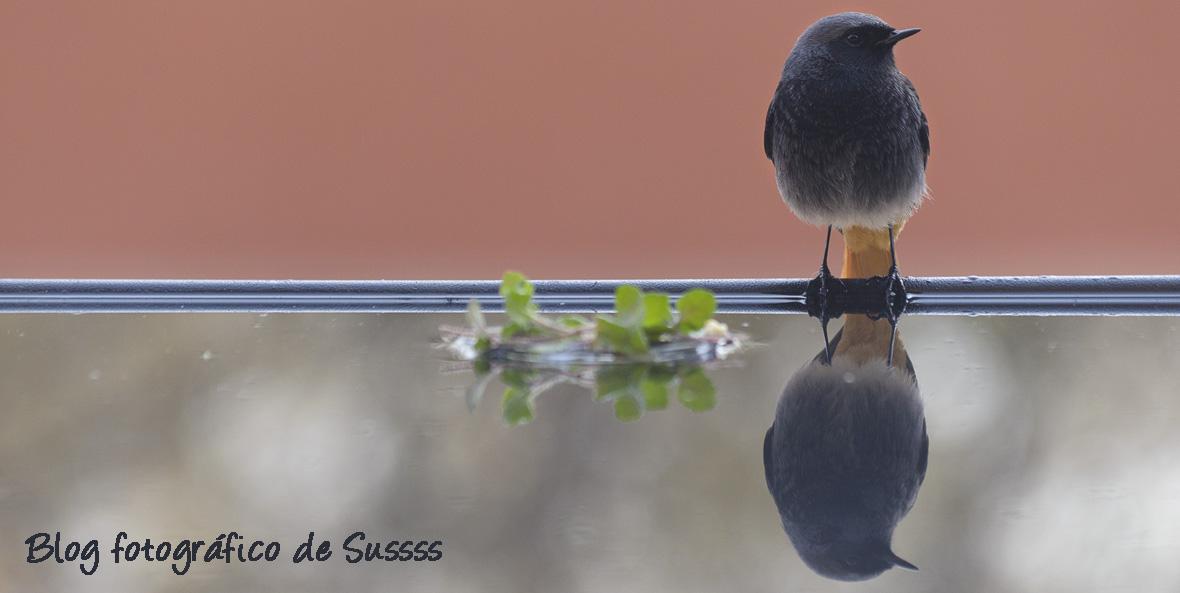BLOG FOTOGRAFICO DE SUSSSS