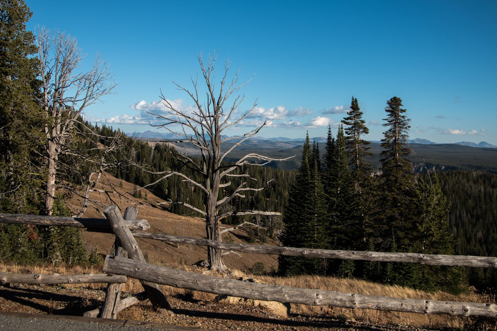 yellowstone national park essay The reintroduction program is a cooperative effort with the national park service and usda forest service late last century, we realized that something was wrong with the ecosystem in yellowstone national park.