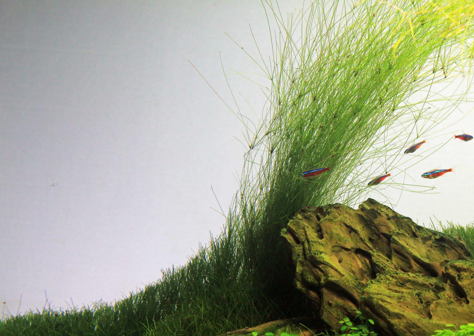 Unas tomas encontradas hoy del iwagumi ~ Recavox Blog Aquascapes