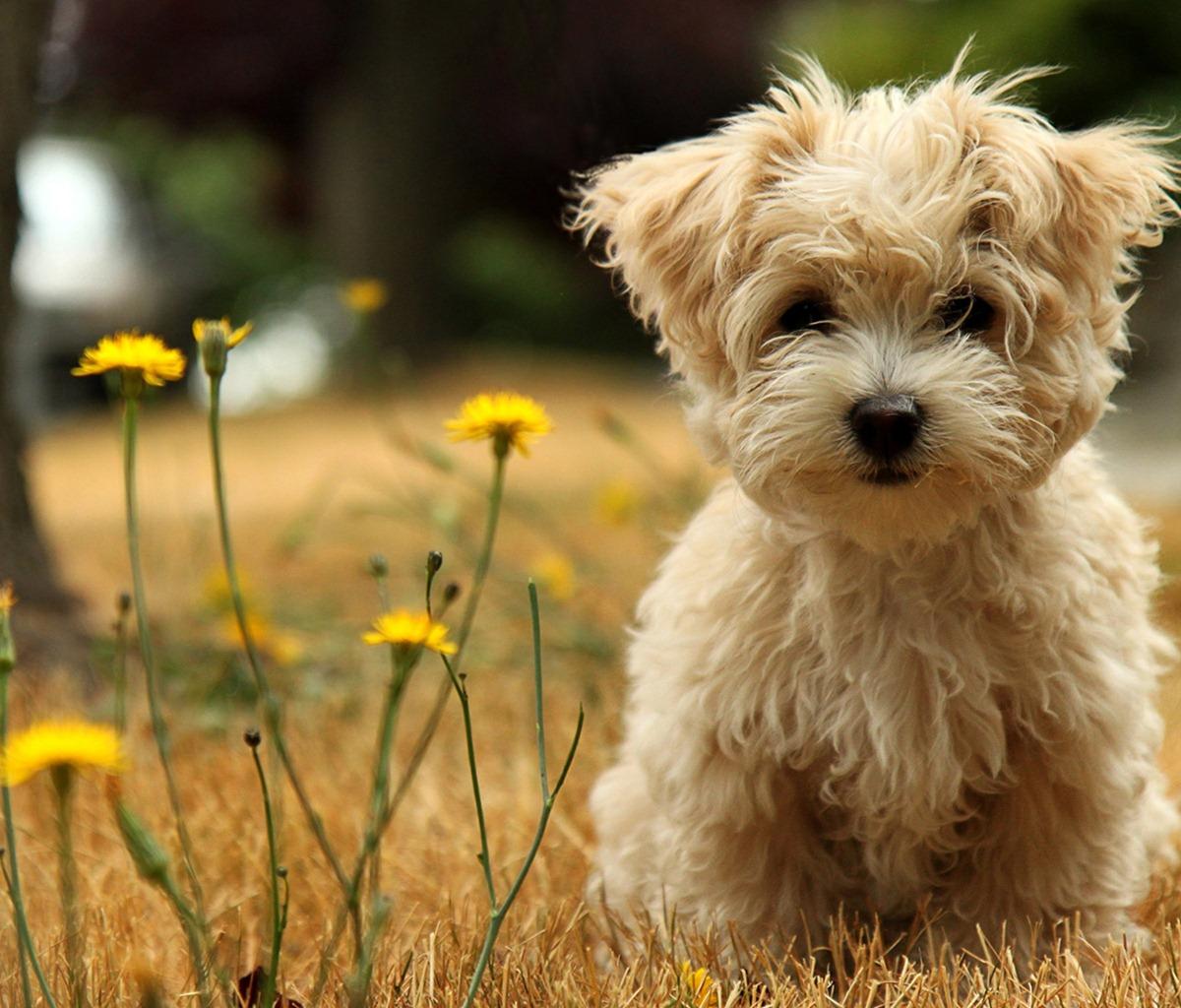 http://2.bp.blogspot.com/-_44wMlxJvRM/T8W8qdTAHQI/AAAAAAAAHKo/eSsbIWkOgYc/s1600/dog.jpg