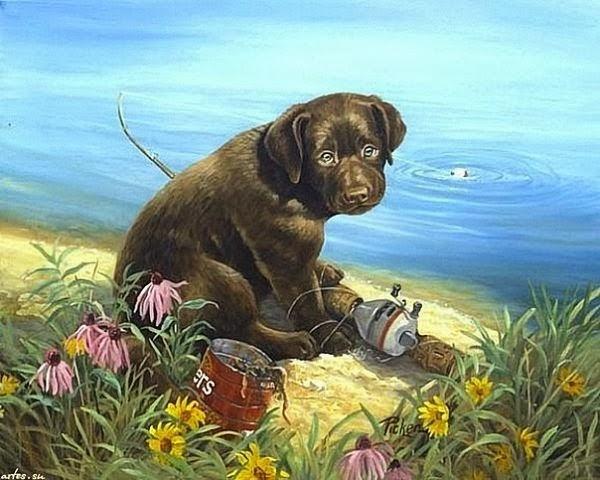 Названия пород собак с фотографиями Декоративные собаки