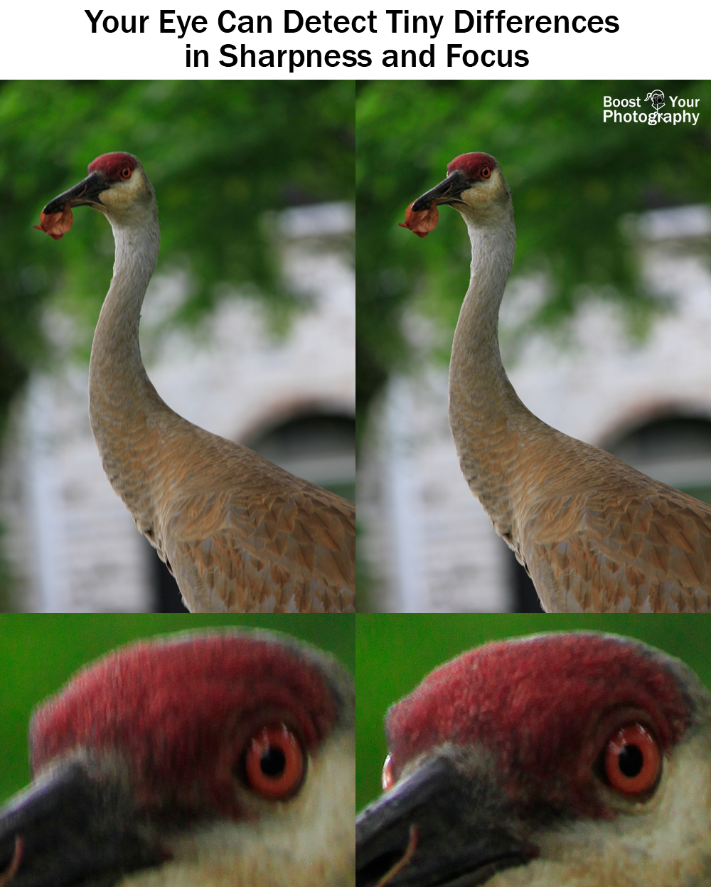 Your eye can detect tiny differences in sharpness and focus | Boost Your Photography