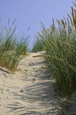 Côte d'Opale - dunes- oyats