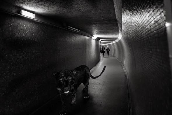Clarisse Rebotier fotografia photoshop animais metrô francês surreal preto e branco divertido
