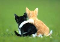 kucing-berduaan