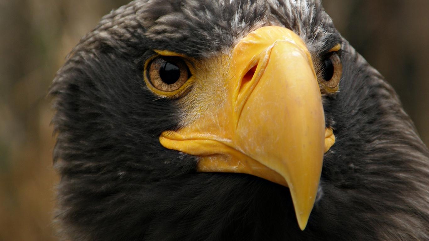 http://2.bp.blogspot.com/-_51Mpi8WHtY/T0om3edSSCI/AAAAAAAABXg/xotDHWbCKts/s1600/animal+Wallpaper+9.jpg