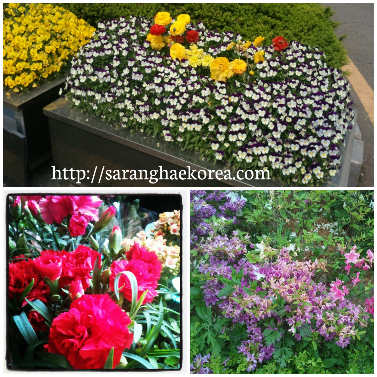 8 featured wild spring flowers of korea saranghae korea what we dont know is that there are a lot of beautiful wild flowers that grow somewhere izmirmasajfo