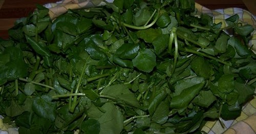 Les gourmandes astucieuses cuisine v g tarienne comment conserver de la salade bien fra che - Comment conserver la salade ...