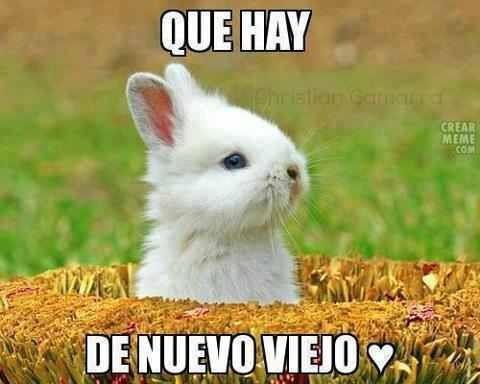 que+hay+de+nuevo+viejo+conejo+conejito+b