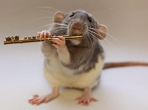 03-The-Flute-Player-Musical-Dumbo-Rat-Ellen-Van-Deelen-www-designstack-co