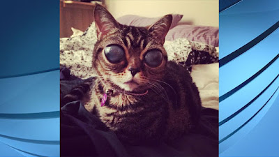 The alien cat that gone viral in the internet