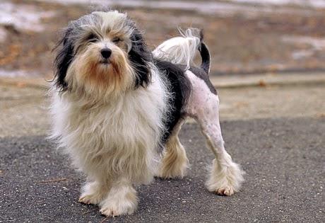 """<img src=""""http://3.bp.blogspot.com/-e4KOdGRz91Y/U5NDS6QMyZI/AAAAAAAAAKM/xeIgq95MuVw/s1600/German-Shepherd.jpg"""" alt=""""Most Expensive Dogs in the World"""" />"""