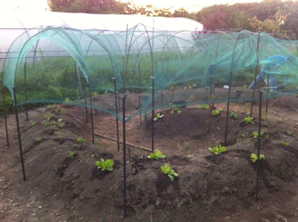 """Il Giardino Aromatico: Progetto """"zucche vuote"""": realizzazione di un orto sinergico inscritto all ..."""