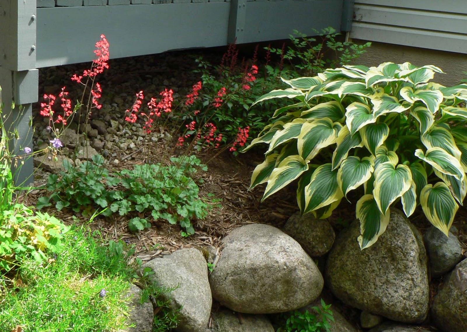 Visit My Garden: Plants in the Garden on hosta and daylily garden, hosta and caladium garden, hosta garden plans blueprints, hosta and hydrangea garden,