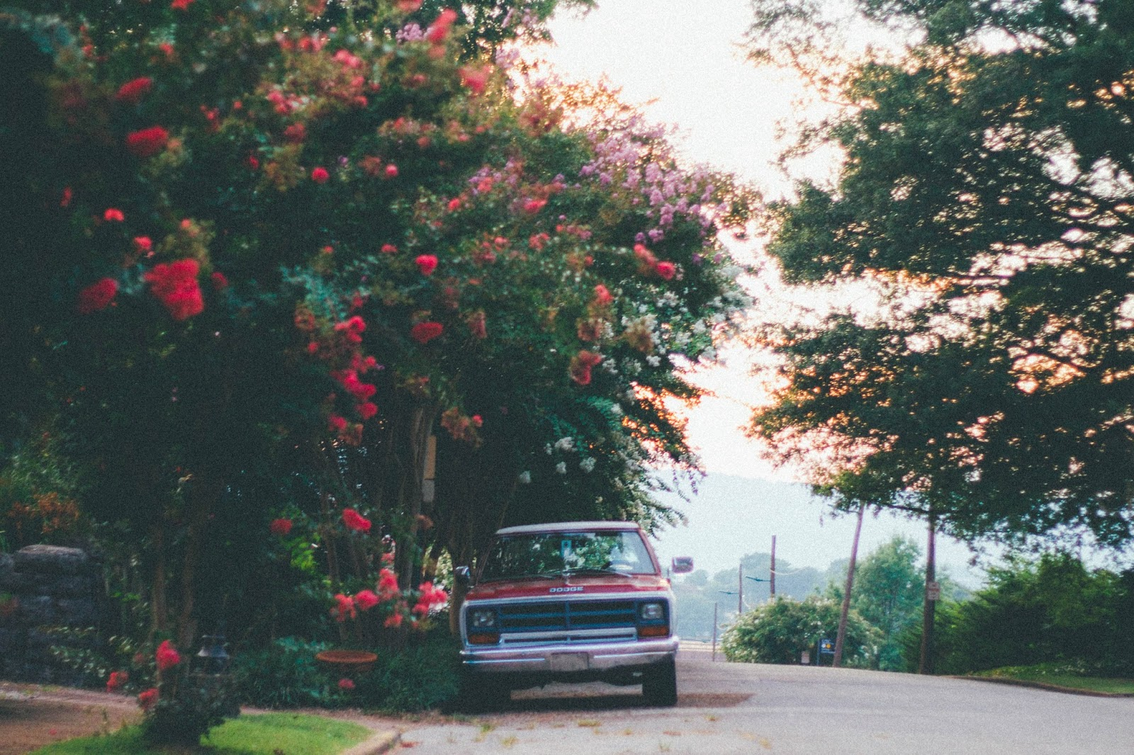 vintage, summer, backroad, pretty, flowers, southern, vsco film,
