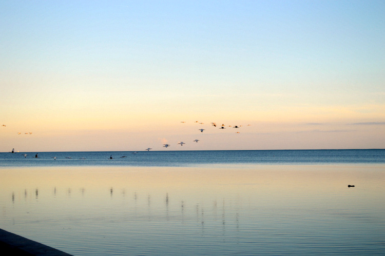 birds flying south at sunset over the water