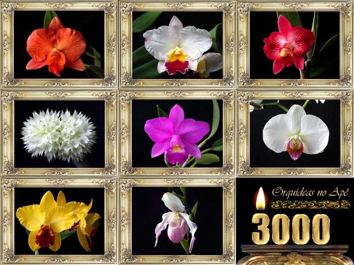 Orquídeas no Apê em festa
