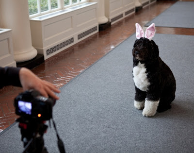 Obama dog Bo. when he was a puppy