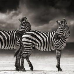 Дикая природа Африки Nick Brandt