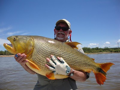 Big fishes of the world dorado freshwater salmiunus for Fishing in argentina
