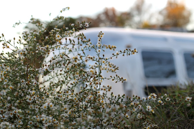 1971 Airstream and fall flowers
