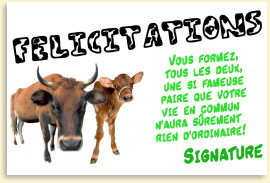 les carte humoristique felicitation texte flicitation mariage - Texte Felicitation Mariage Humour