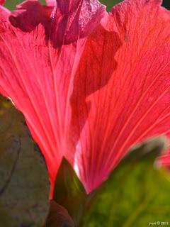 backlit red
