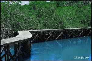hutan_bakau