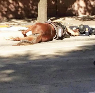 dying horse, pet, police horse
