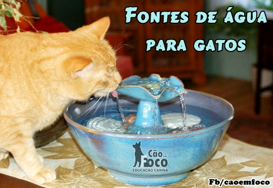 Adestraclub Gatos E As Fontes De 225 Gua