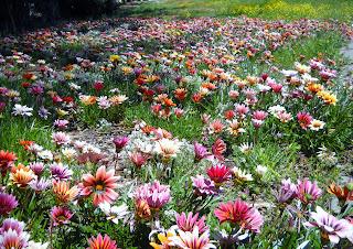 color y más color para este paisaje de flores