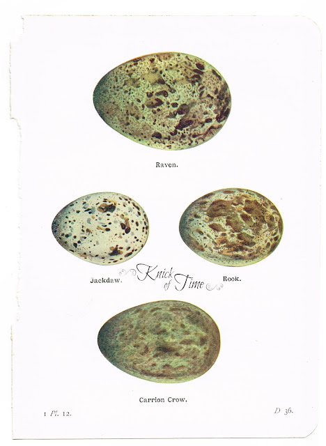 Antique-Bird-Egg-Nature-Art-Prints-Book-Plates-from-Knick-of-Time