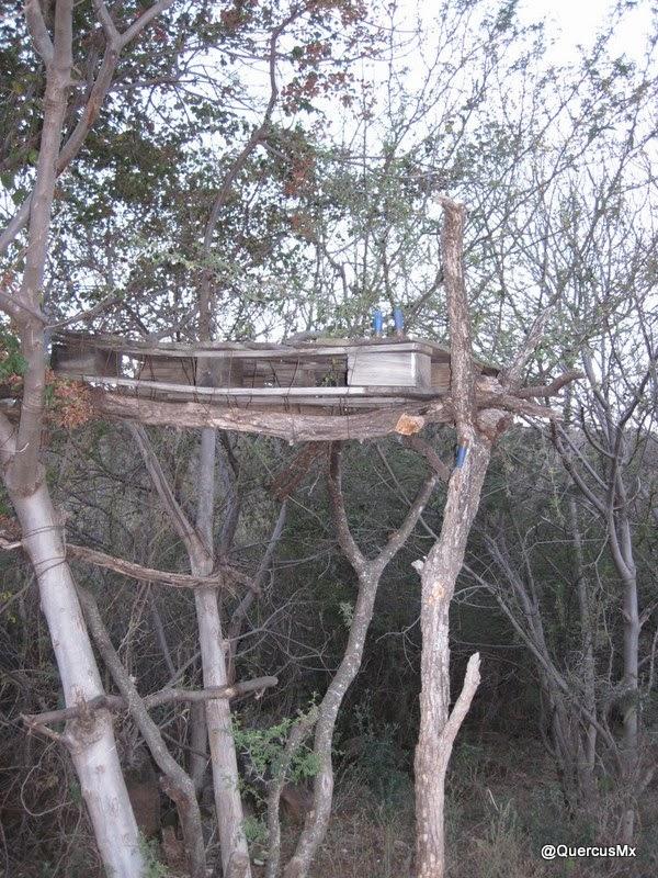 Plataforma de cacería en Cerro Viejo (Jalisco) Excelente si se cazara con una cámara fotográfica en vez de con un rifle