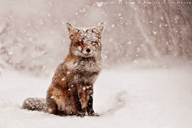1. These 11 Photos Will Make You Fall In Love With Foxes