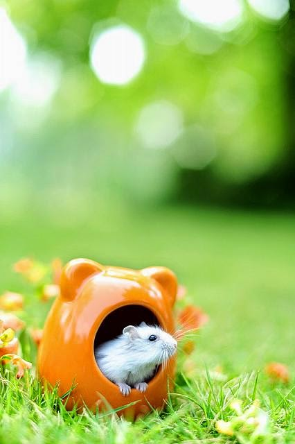 Cute and funny pictures of hamsters 2-10