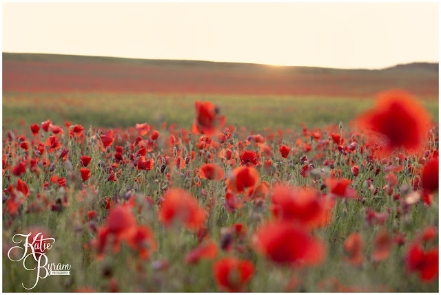 poppy field, poppies, poppyfield, poppy field north east, poppy field newcastle, poppy field durham, red flowers, sunset.