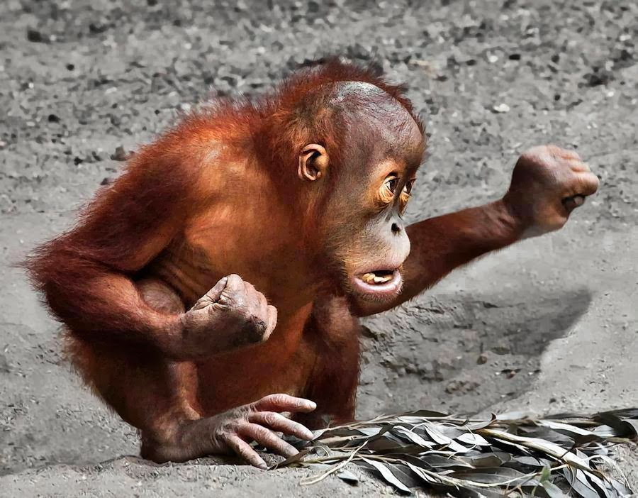 Monyet lagi gemes